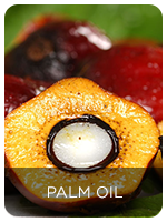 Application In Palm Oil