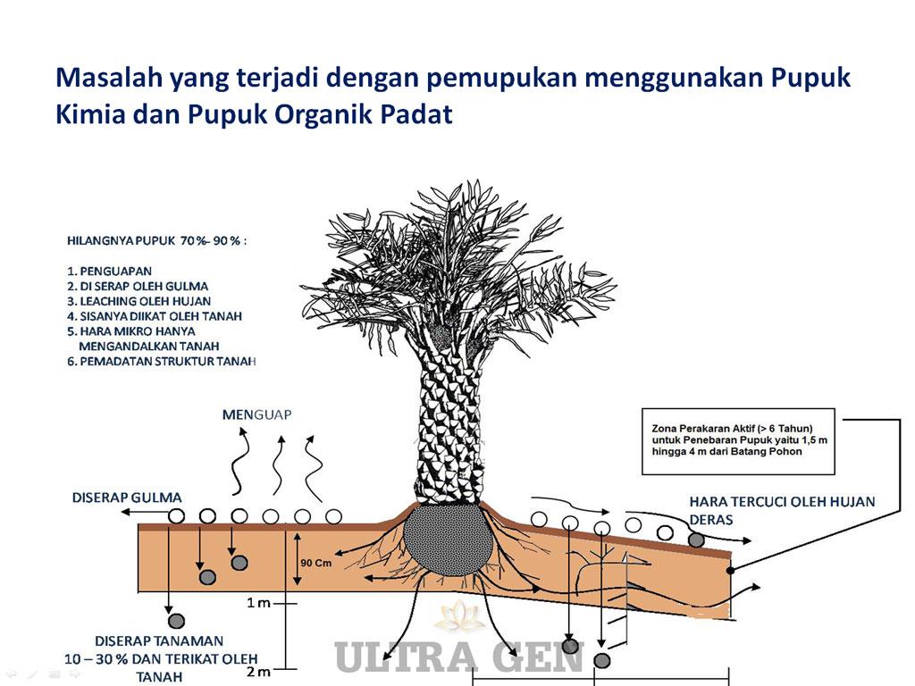 Solusi untuk lahan sawit bermasalah